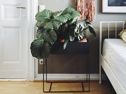 Pinterest Trend 2017: Indoor Pflanzen | connox.at