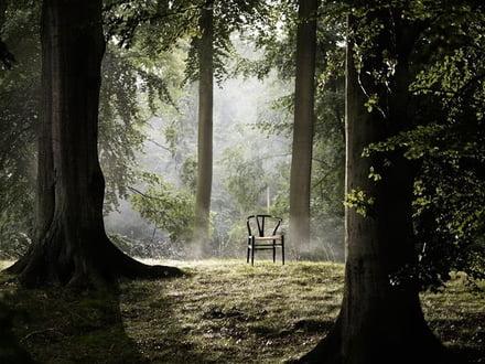 Carl Hansen - CH24 - Wald - Nachhaltigkeit