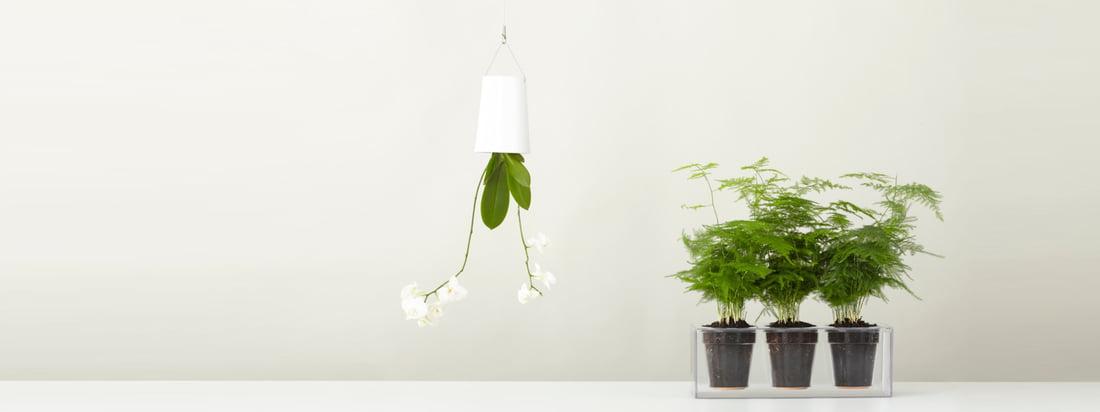 Boskke, ein Hersteller aus Neuseeland, ist bekannt für seinen Sky Planter & den Cube Blumentopf. Den von der Decke hängenden Blumentopf und den durchsichtigen Pflanzbehälter hier im Shop kaufen.