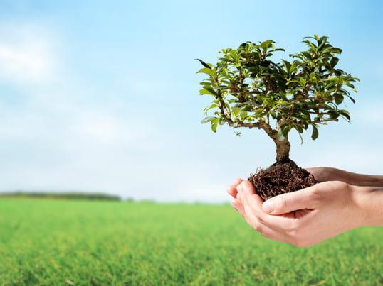 Ökologie und Nachhaltigkeit 4 zu 3
