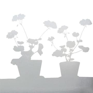 LADP - Pelargon Fenstersticker