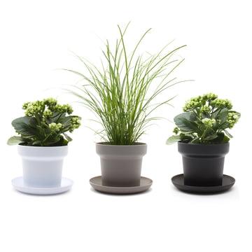 Authentics - Green Pflanztopf, weiß, grau, schwarz - Pflanzen