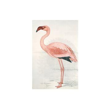 Flamingo (Finch-Davies) von IXXI in 80 x 120 cm