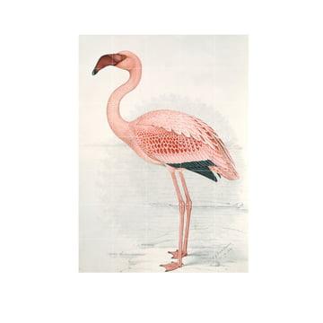 Flamingo (Finch-Davies) von IXXI in 100 x 140 cm
