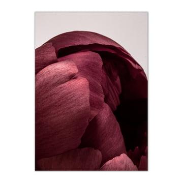 Paper Collective - Peonia 01, 50 x 70 cm