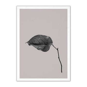 Paper Collective - Sabi Leaf 03, 50 x 70 cm