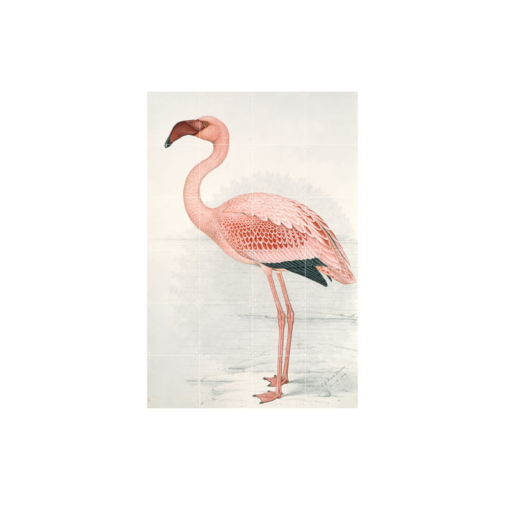 Flamingo (Finch-Davies) von IXXI in 80 x 120 cm