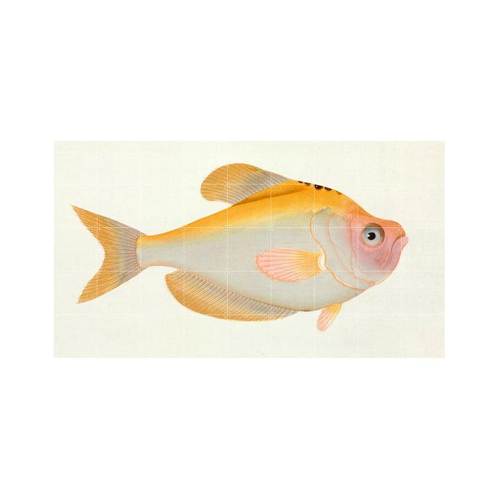 Gelber Fisch (Bloch) 180 x 100 cm von IXXI
