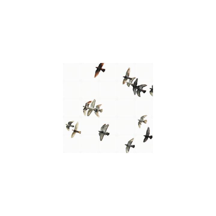 Vogelschwarm (Rakha) 100 x 100 cm von IXXI