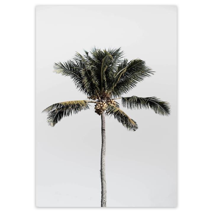 artvoll - Palm Tree No.1 Poster, 50 x 70 cm