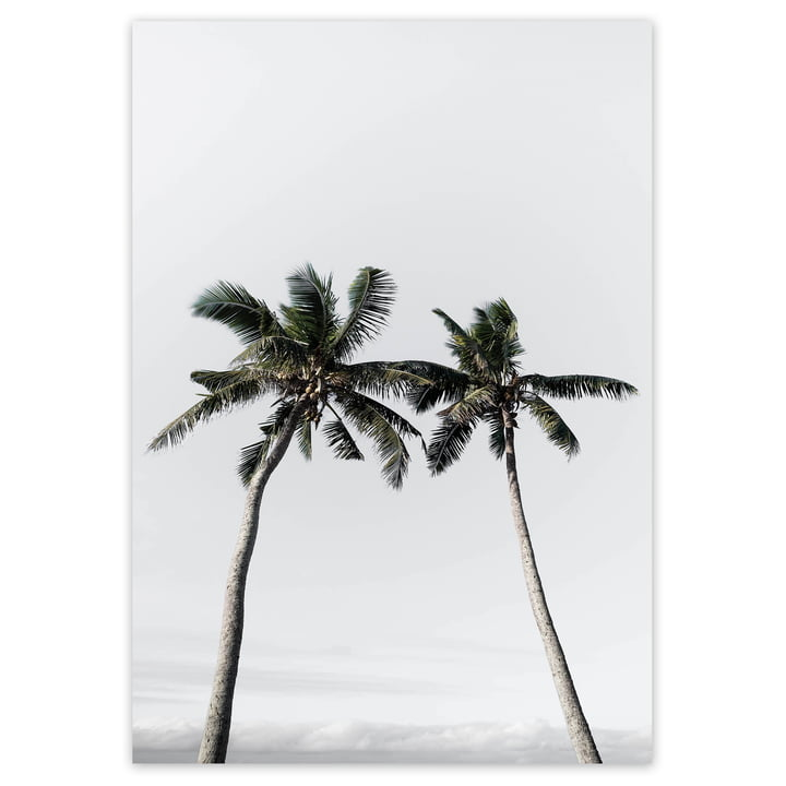 artvoll - Palm Tree No. 2 Poster