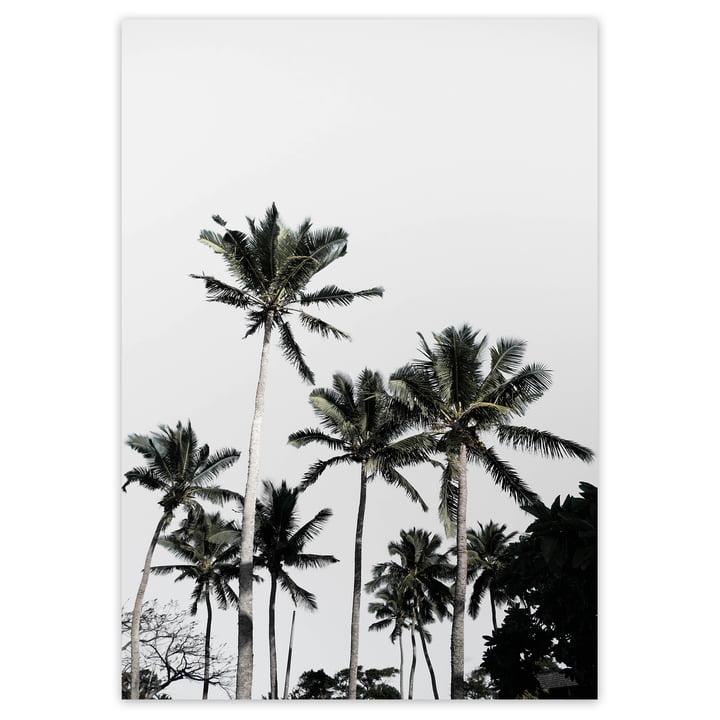 artvoll - Palm Tree No. 3 Poster