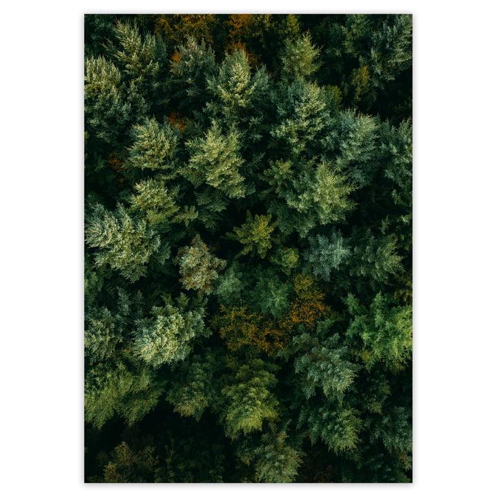 artvoll - Forest Poster