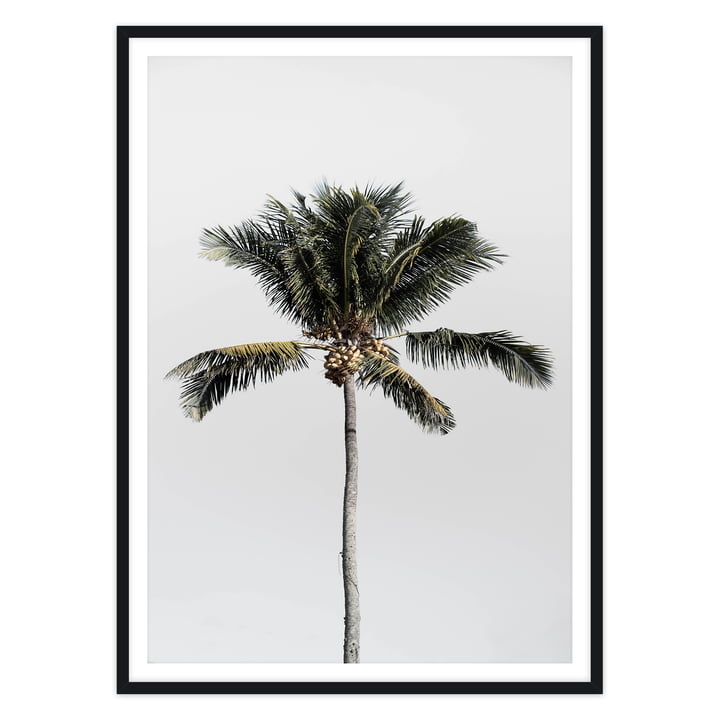 artvoll - Palm Tree No. 1 Poster mit Rahmen, schwarz