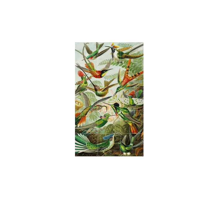 Kolibris (Haeckel) 60 x 100 cm von IXXI