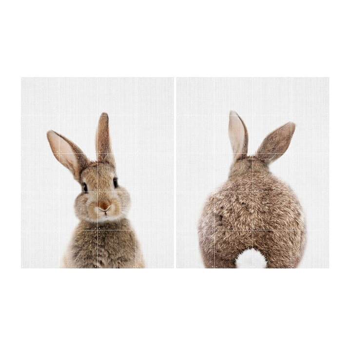 Rabbit 80 x 100 cm von IXXI