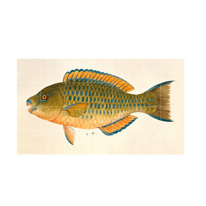 Green Fish Wandbild von IXXI in der Größe 140 x 80 cm