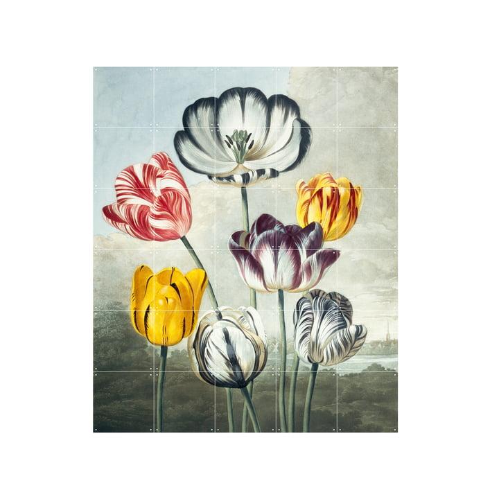 Tulpen Wandbild 100 x 120 cm von IXXI