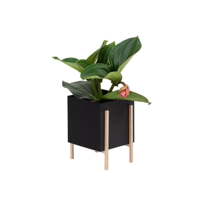 Der Botanic Pot von Design House Stockholm, schwarz / natur