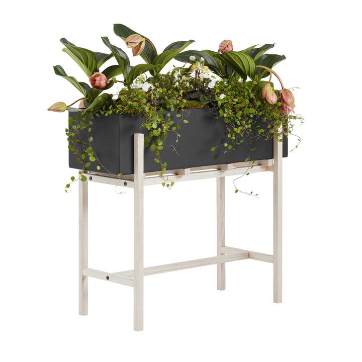Der Botanic Stand von Design House Stockholm, schwarz / natur