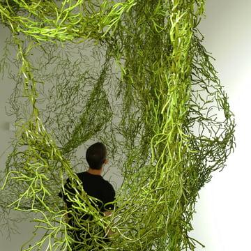 Vitra Algues