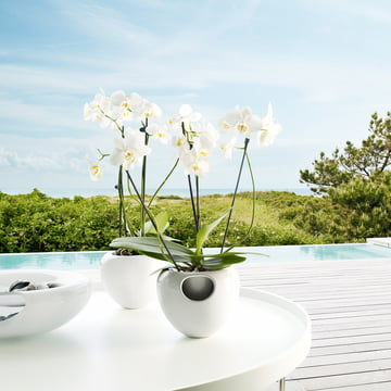 Eva Solo - Orchideentopf mit Pflanze