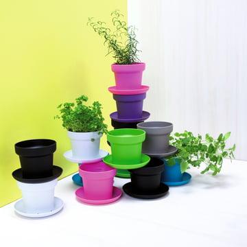 Authentics - Green Pflanztopf, Farben - Gruppe