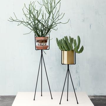Plant Stand ist in zwei Größen