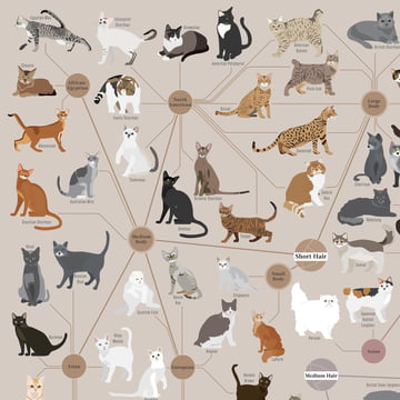 Cats Categorized von Pop Chart Lab
