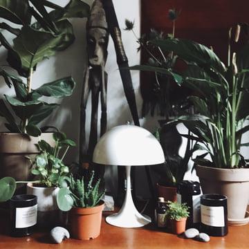 Pinterest trend 2017 indoor pflanzen - Trend wandfarben 2017 ...