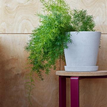 Der Hay - Blumentopf mit Untersetzer in grau