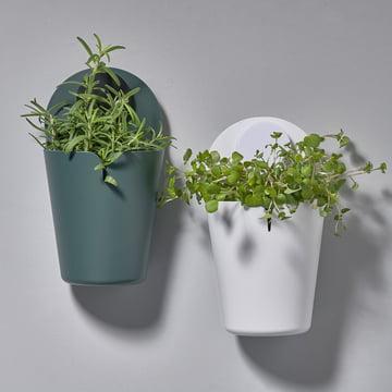 Der Zone Denmark - Puck Bucket Wandbehälter in mini mit Pflanzen