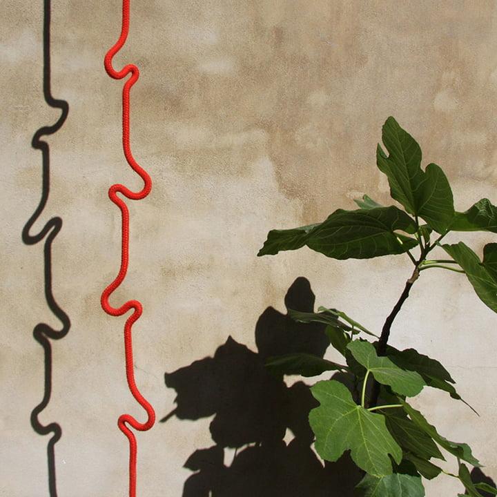Roberope, Pflanze