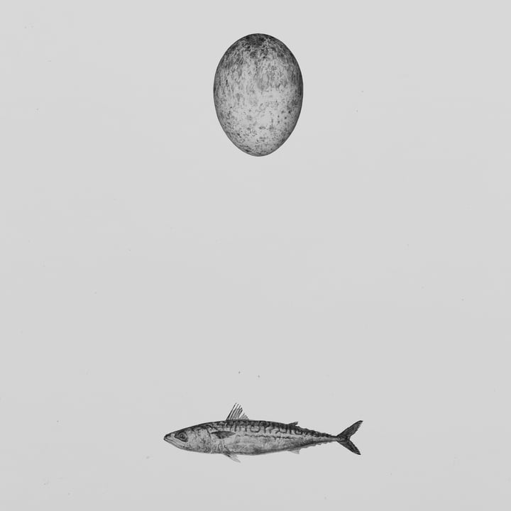 Paper Collective - Swedish Mackerel