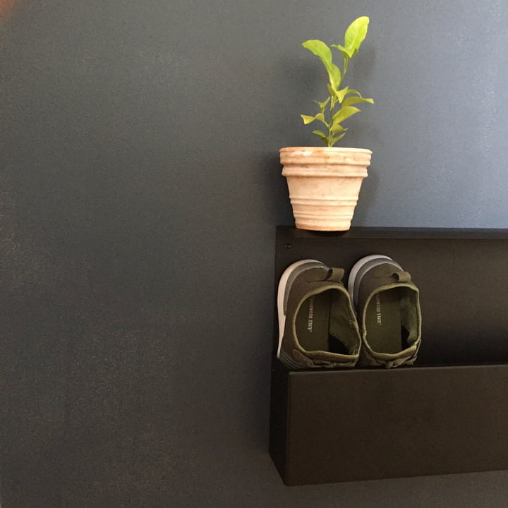 Die Nichba Design - Shoe Box dekorativ mit Pflanze