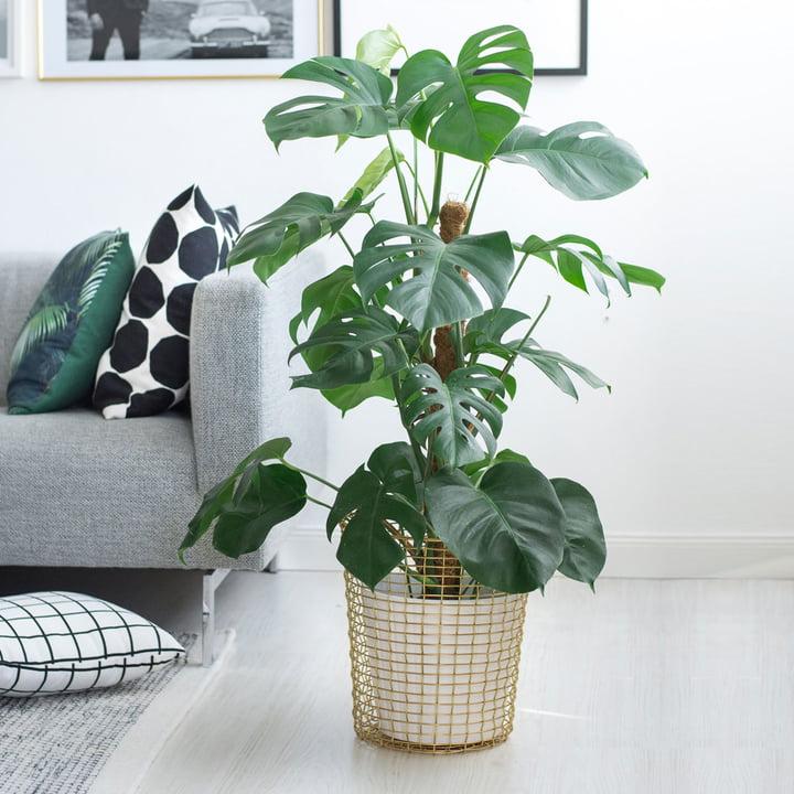 5 Trendpflanzen: Deko-Tipps und Pflege